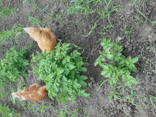Little helpers in the garden